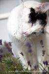 Katzenfotos Buxtehude