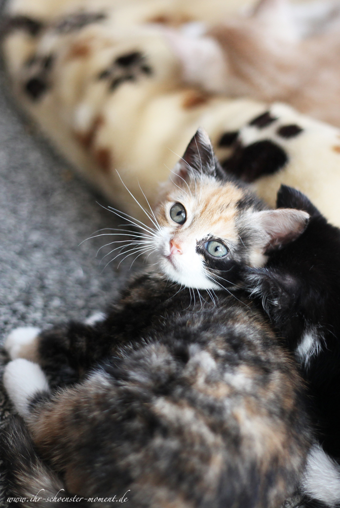 Katzenfotos in Balje - Mobile Haustierfotografie (1/6)
