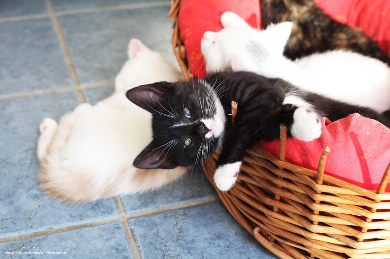 Katzenfotos in Balje - Mobile Haustierfotografie (2/6)