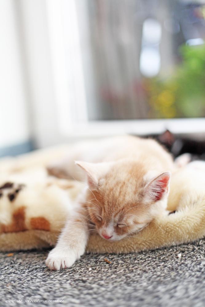 Katzenfotos in Balje - Mobile Haustierfotografie (3/6)