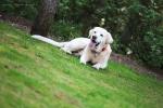 Hundefotos in der lüneburger heide-ihr schönstermoment