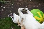 hundefotos in der lüneburgerheide