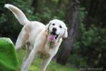 hundefotos tierfotos ihr schönstermoment