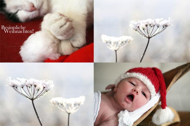 Frohe weihnachten ihr sch nster moment julia hartel fotografie blog - Kinderfotos weihnachten ...