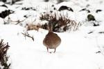winter-naturfotos-landkreis-stade-img_5335