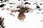 winter-naturfotos-landkreis-stade-img_5336