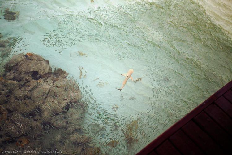 Reisefotografie - Malediven 2011 (4/6)