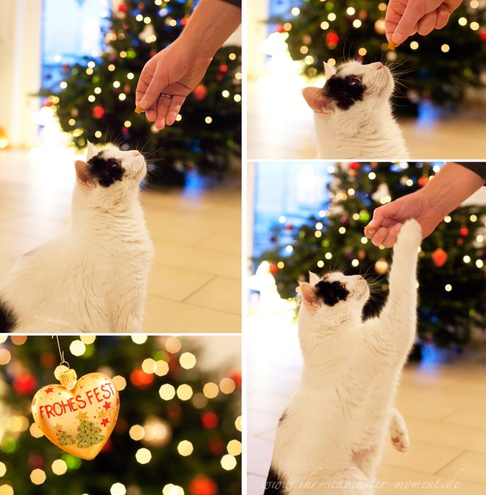 ♥ Wolke, das Weihnachtswunder...  ♥ (1/2)