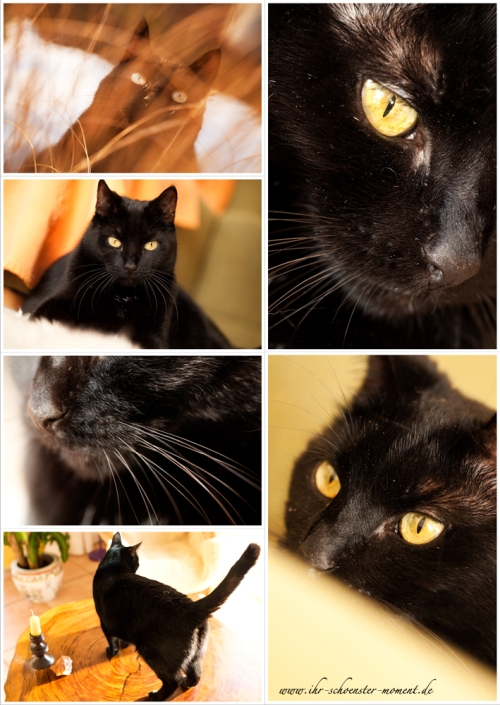collage bungee tierfotografie katzen