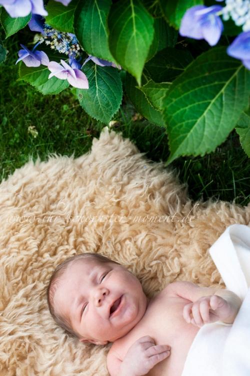neugeborenenfotos sommer 2009