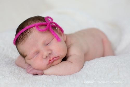 newborn buxtehude
