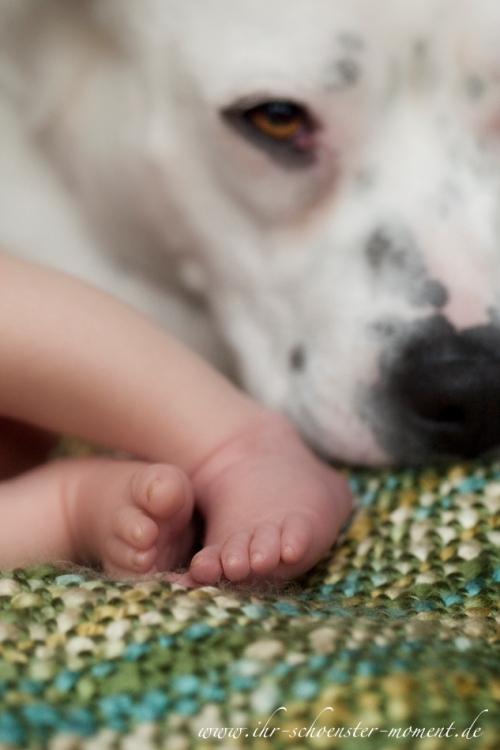 neugeborenenfoto mit hund