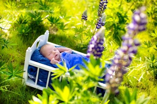 Neugeborenenfotos draußen in der stadt