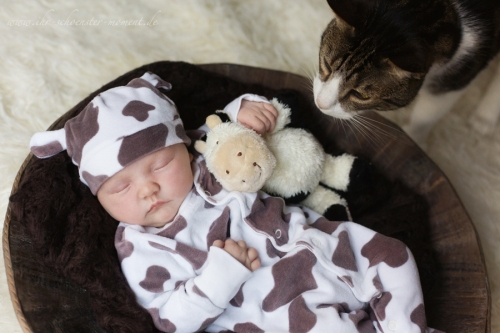 neugeborenes und katze