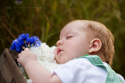 Babyfotografie Kornfeld