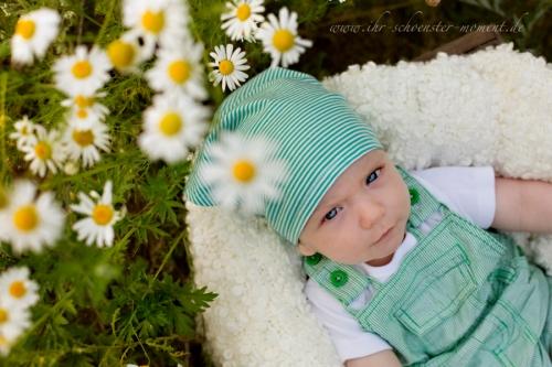 babyfotos kamillenfeld
