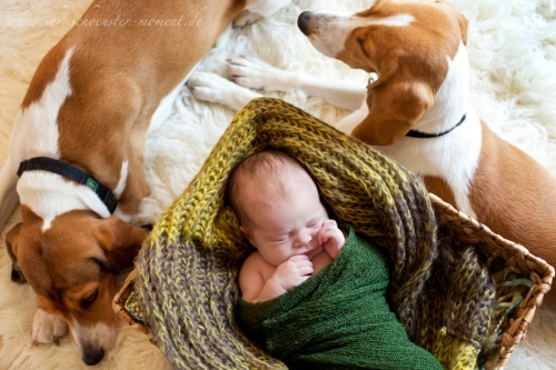 birne helene und hund
