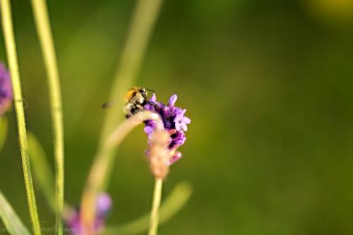 Naturfotografie Buxtehude-40