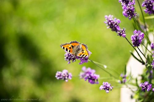 Naturfotos Buxtehude-7