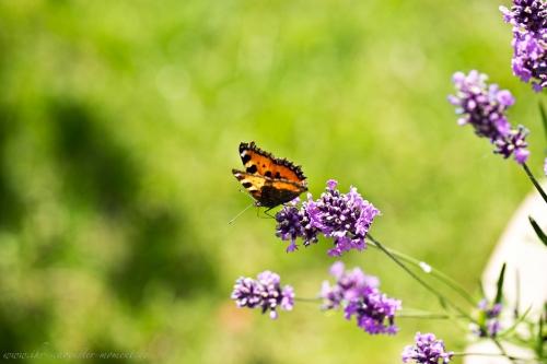 Naturfotos Buxtehude-8