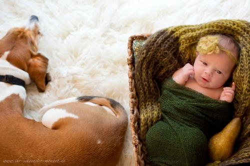 neugeborenenbilder birne helene