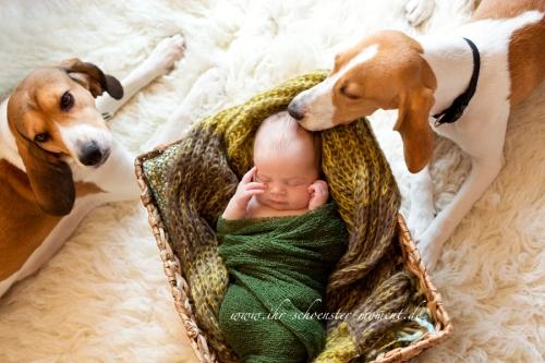 neugeborenenbilder mit hunden