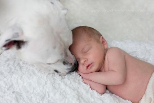 neugeborenenfotos mit hund