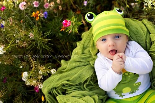 kleiner Frosch babyfotos