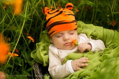 kleiner tiger babyfotografie draußen