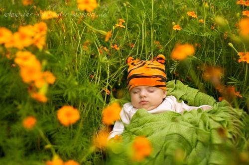 Kleiner Tiger -Babyfotos
