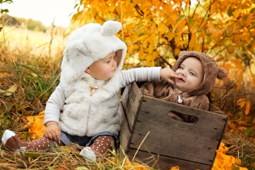 babyfotos eisbär und braunbär