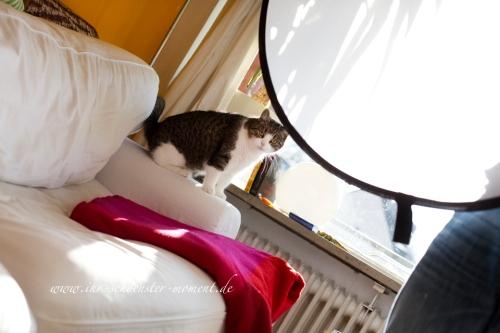 Babybauchfotos Making of mit Katze
