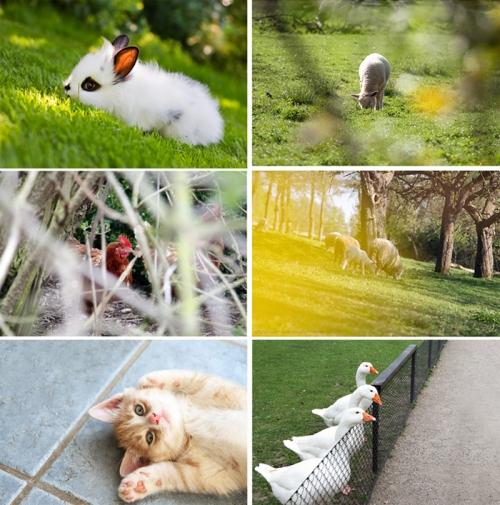 Collage Tierbabys gesucht