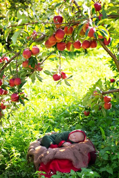 Neugeborenenfotografie unterm Apfelbäumchen