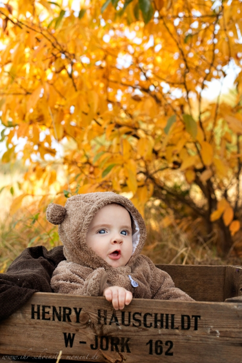 Babyfotos im Herbst Buxtehude-4
