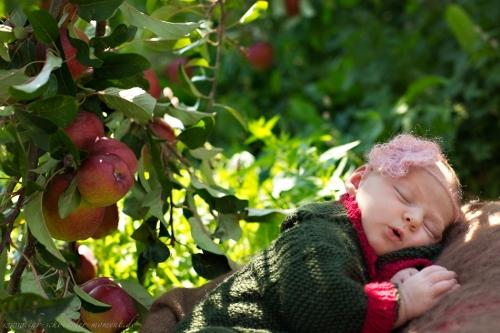 Neugeborenenfotos in Buxtehude Apfelmädchen_-11