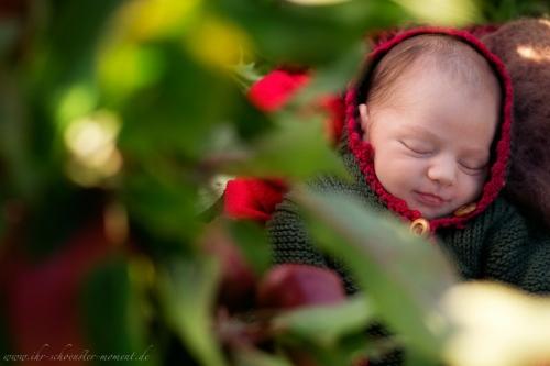 Neugeborenenfotos in Buxtehude Apfelmädchen_-15