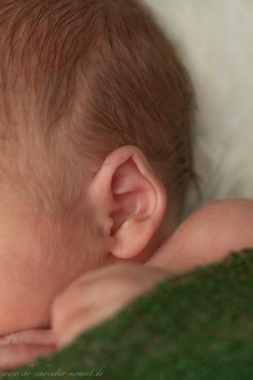 Neugeborenenfotos in Buxtehude Eisbärchen-10