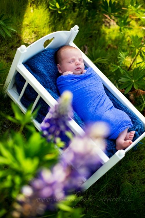 Neugeborenenfotos in der Natur in Buxtehude