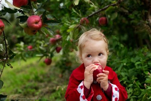Kinderfotos auf dem Apfelhof-10