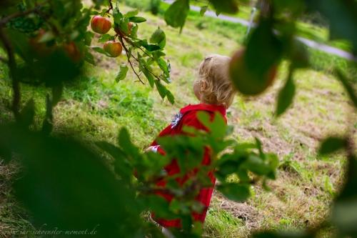 Kinderfotos auf dem Apfelhof-12