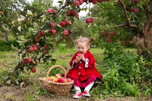 Kinderfotos auf dem Apfelhof-5