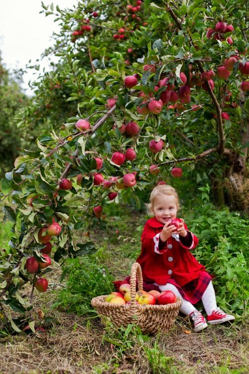 Kinderfotos auf dem Apfelhof-8