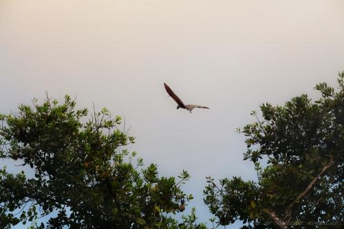Reisefotografie Malediven Flughund