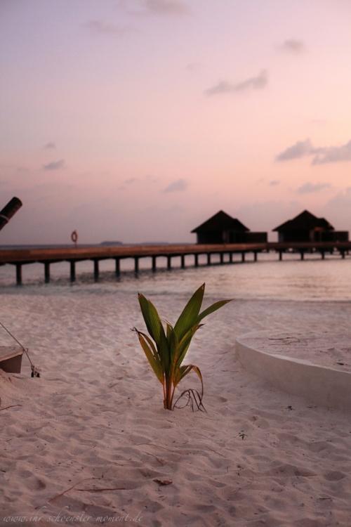 Reisefotos Malediven-33