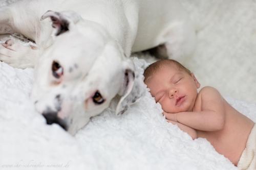 Neugeborenenbilder mit Hund-11