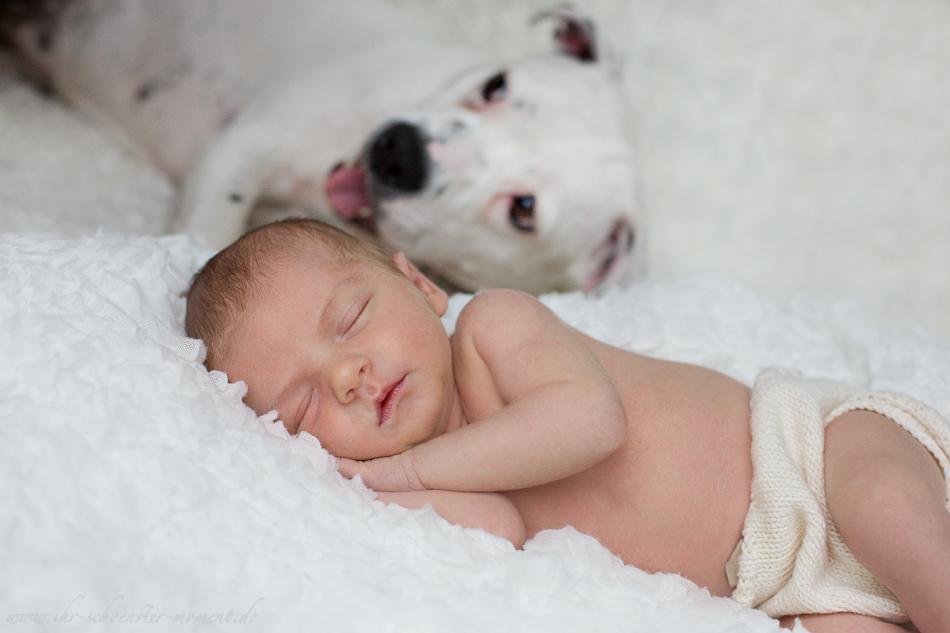 Neugeborenenbilder mit Hund-14