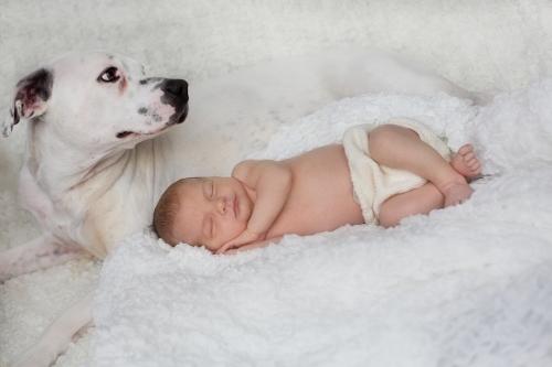 Neugeborenenbilder mit Hund-16