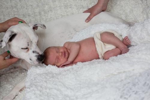 Neugeborenenbilder mit Hund-17