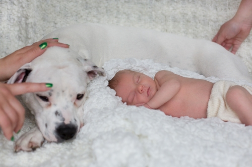 Neugeborenenbilder mit Hund-18